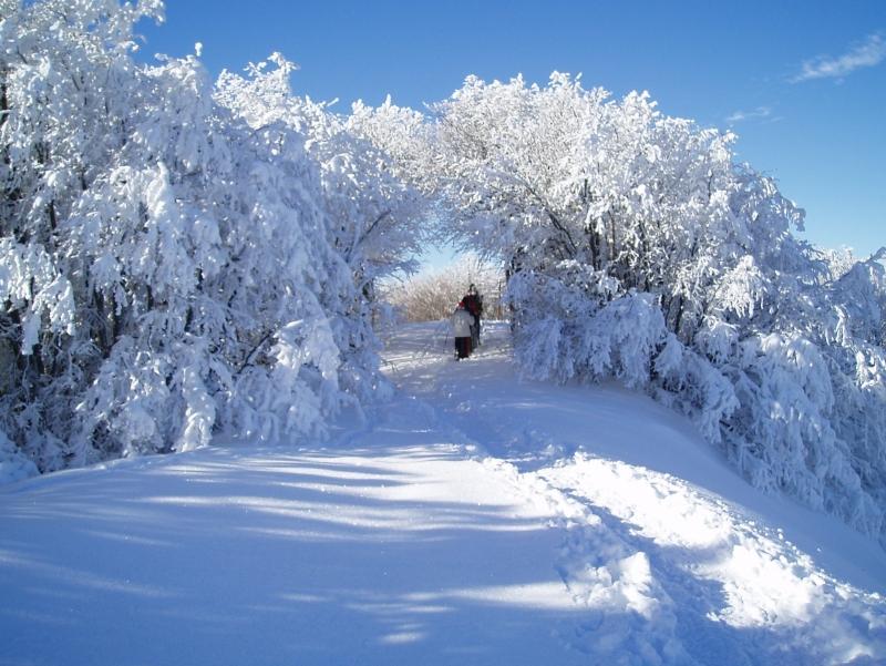 Caccia alla traccia - Bimbi  Neve nel Parco delle Foreste Casentinesi