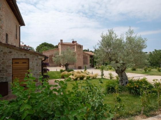 Raccogliamo le olive in Umbria?