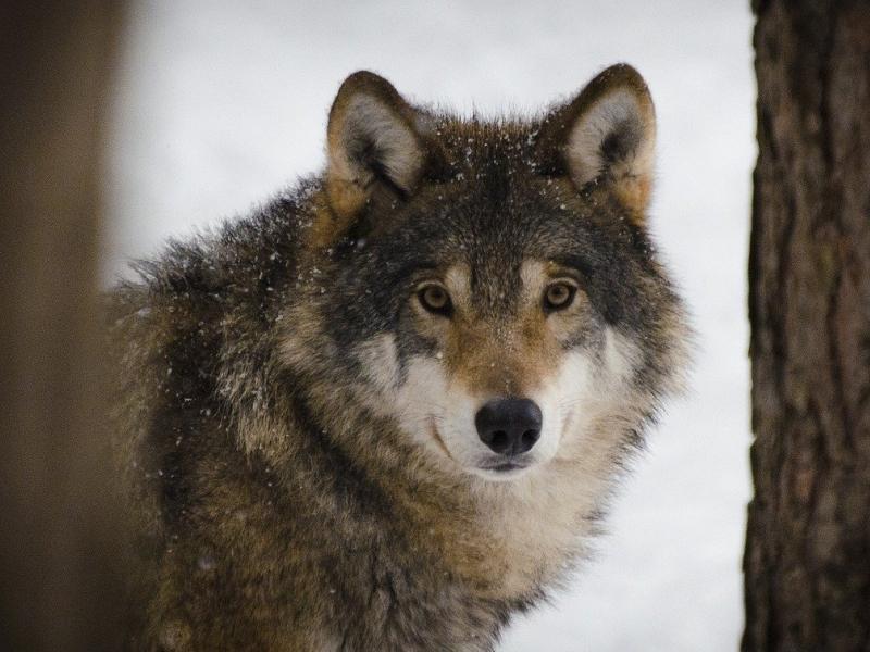 Nel parco nazionale dAbruzzo con i bambini sulle tracce del lupo