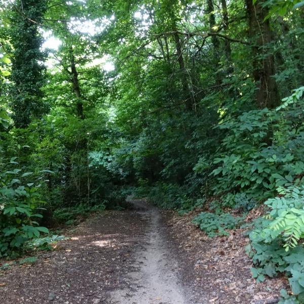 passeggiata famiglie bosco monte
